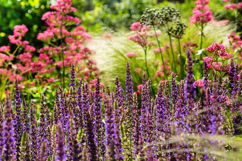 Gartenplanung-2014-06-06-08-31-DM6A4335.jpg