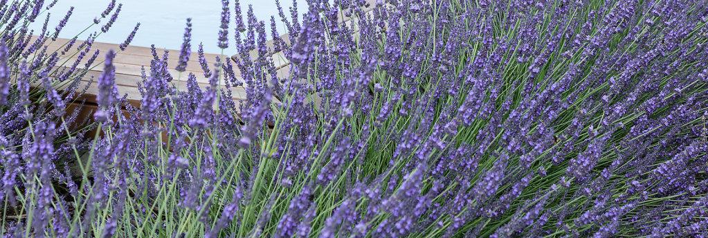 Gartenplanung-2013-07-13-17-12-m6a8959.jpg