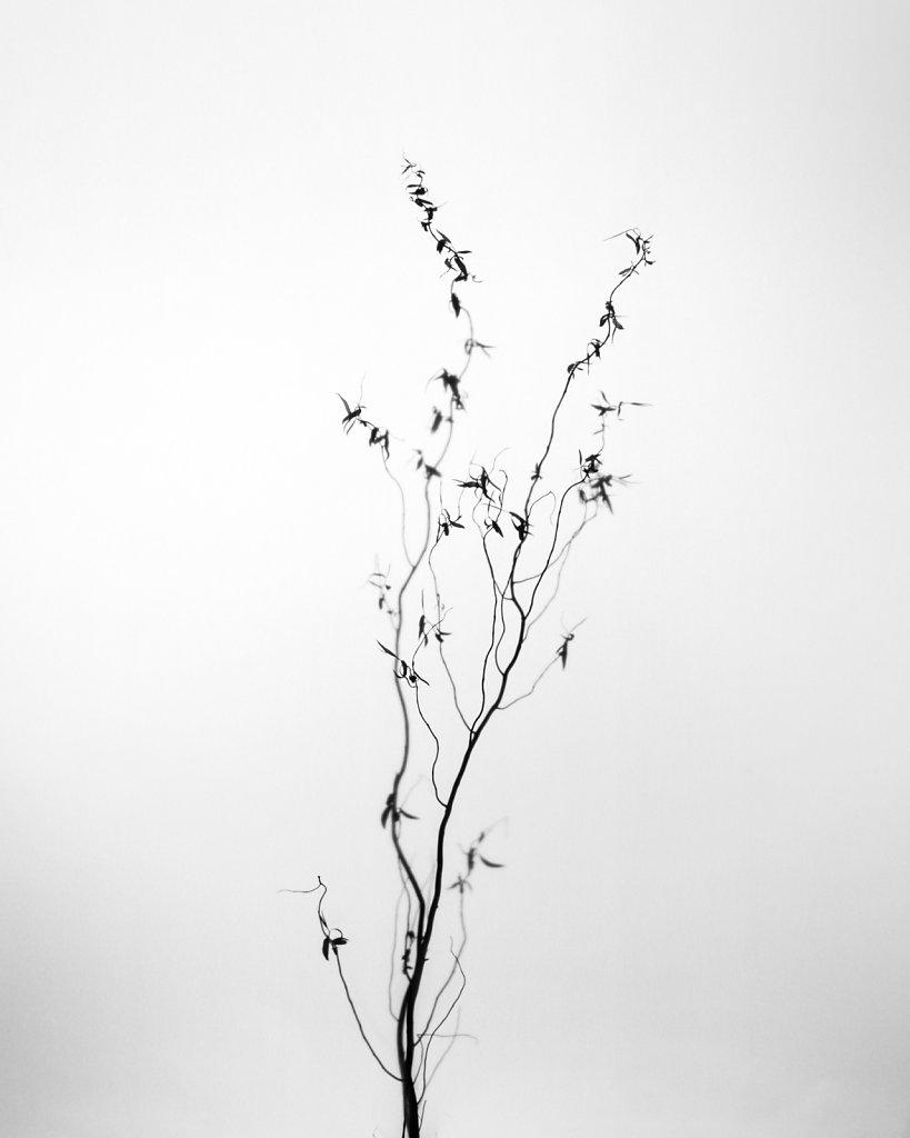 white-garden-2016-03-13-17-49-dm6a9186-juttafischel.jpg